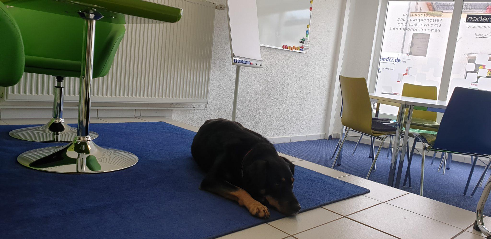 Büro-Hund Maya
