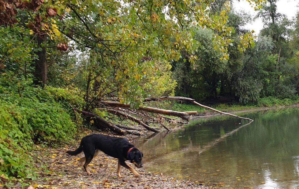 Maya frei am Fluss