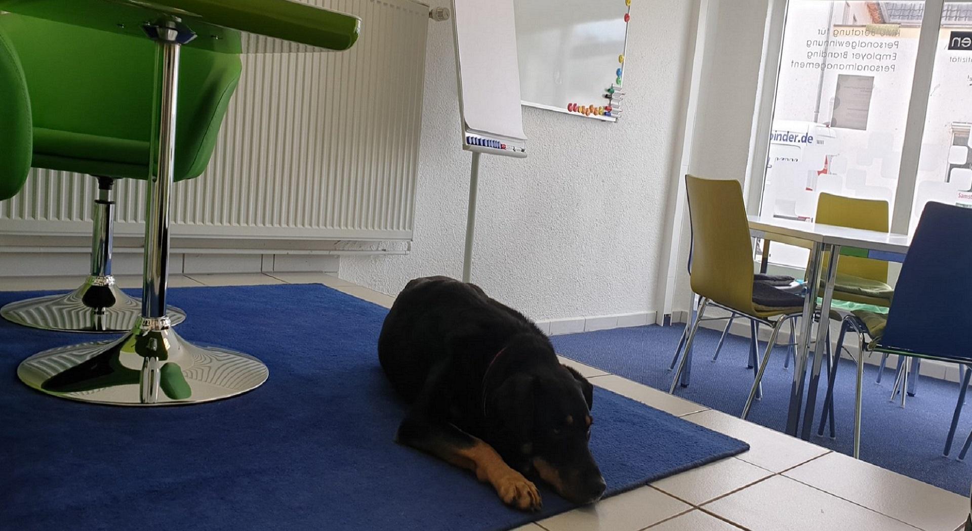 Bürohund_Maya_positiv-abheben-entspannungsbeauftragte